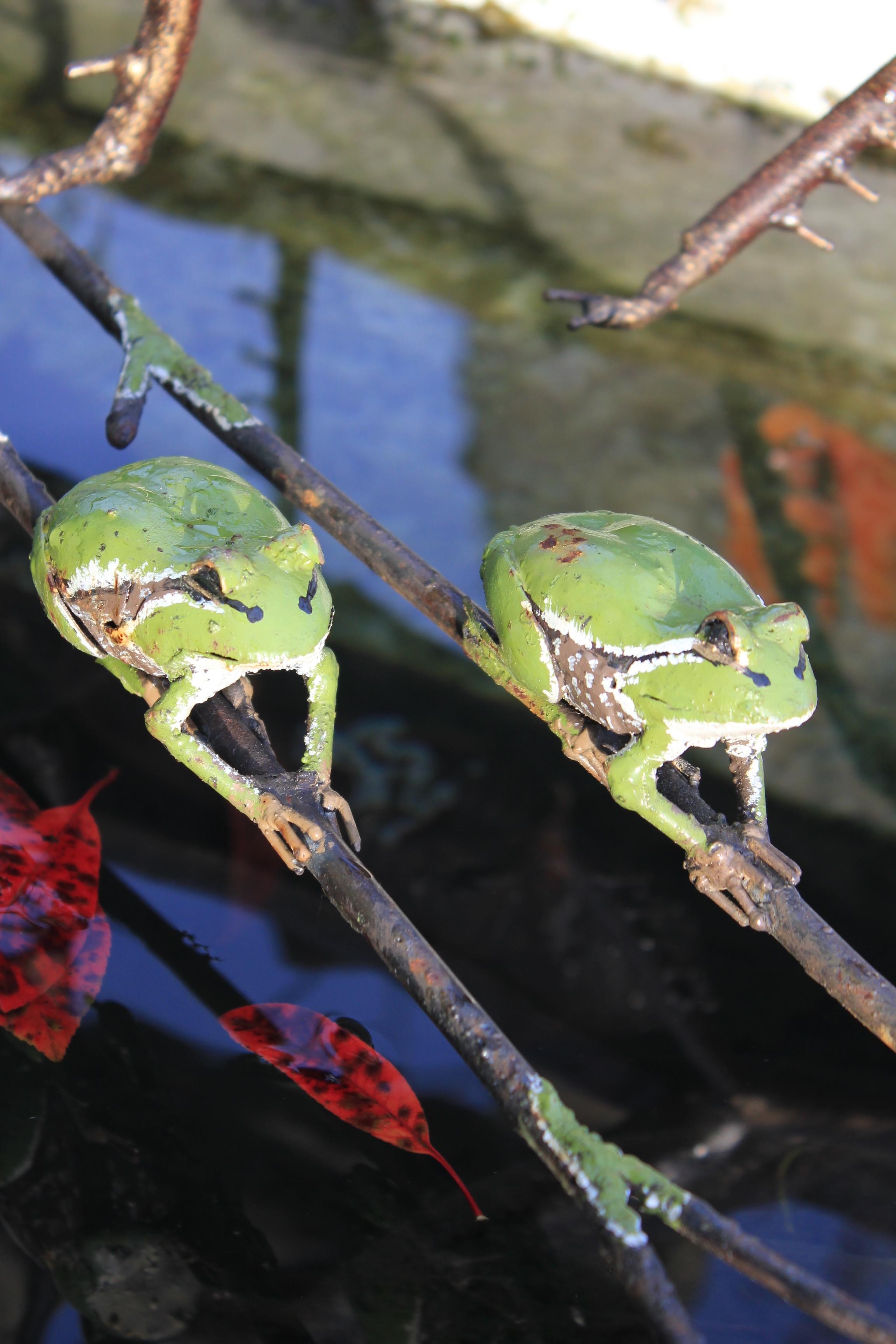 Piquet grenouille