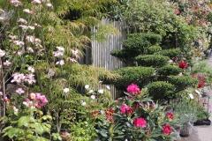Ilex bonsai - Rhododendron - Cornouiller - Acer