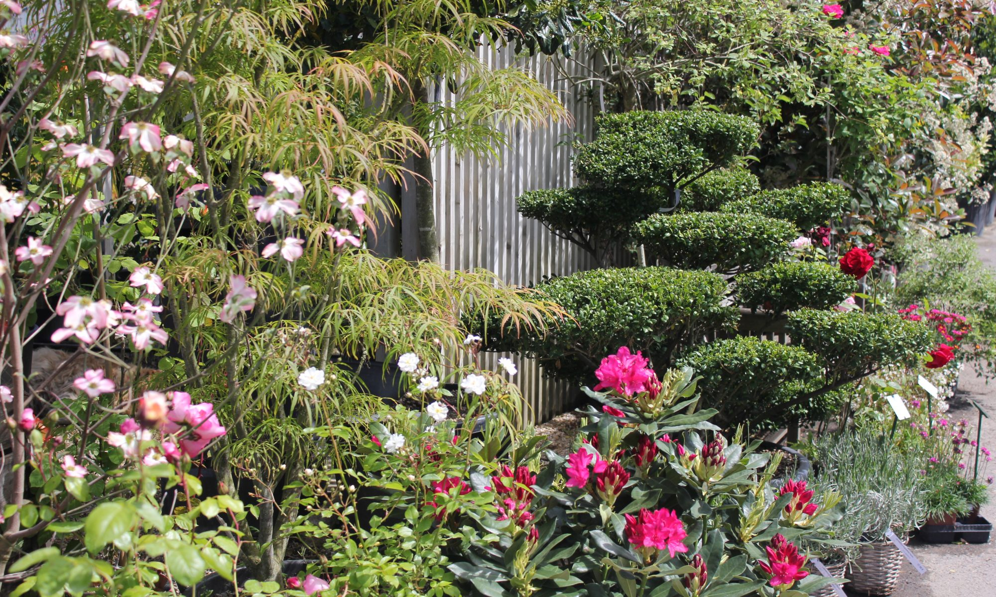 Jardigreen p pini re jardinerie dans les yvelines 78 for Entretien jardin orgeval